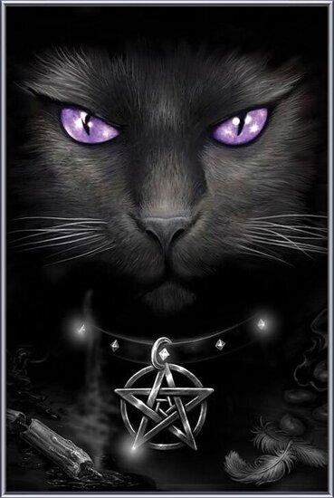 Poster emoldurado Magical cat